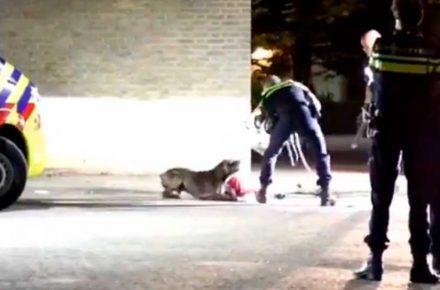policia holandesa tranquiliza perro