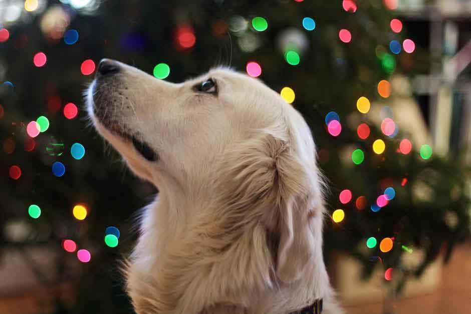 perro ano nuevo