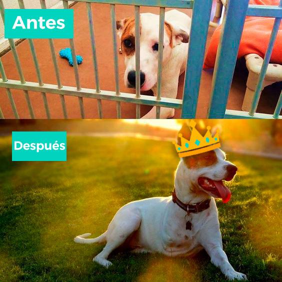 historia perros reyes