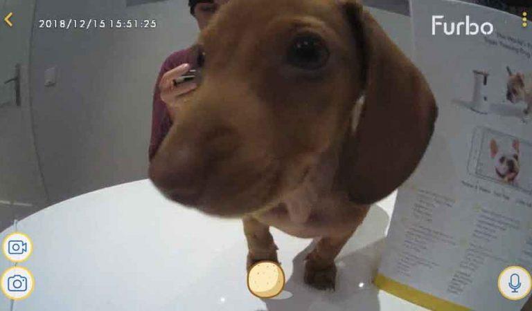 Probamos FURBO, la cámara interactiva para perros