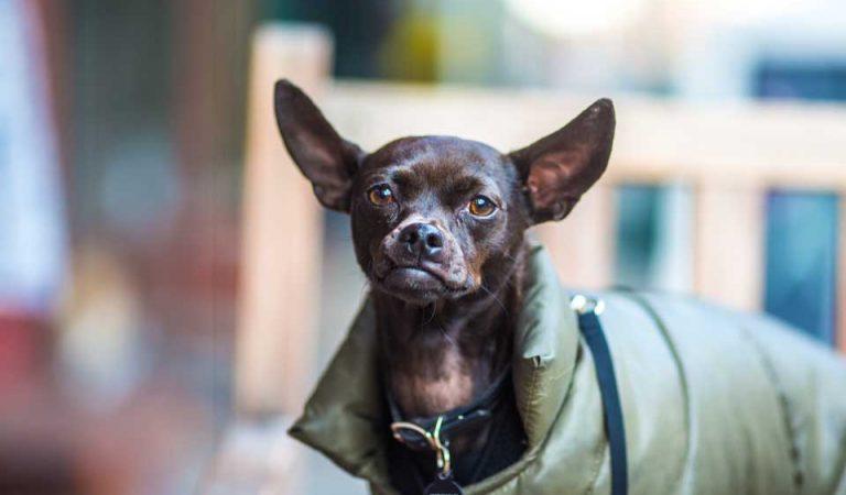 ESPAÑA YA MULTA CON 30.000 euros a los que maltraten a sus mascotas