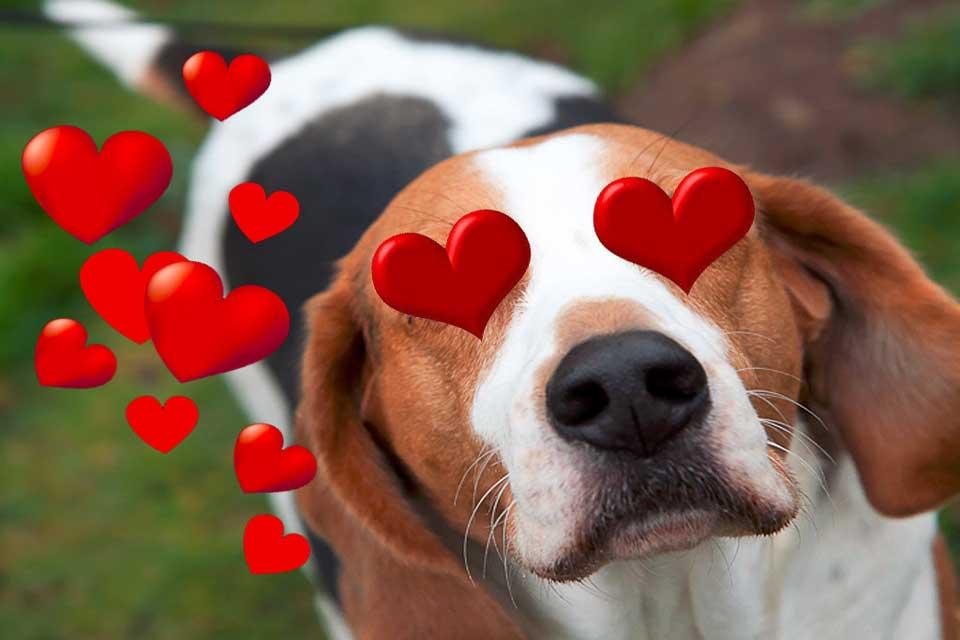 perro enamorado