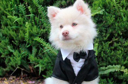 perro en smokin