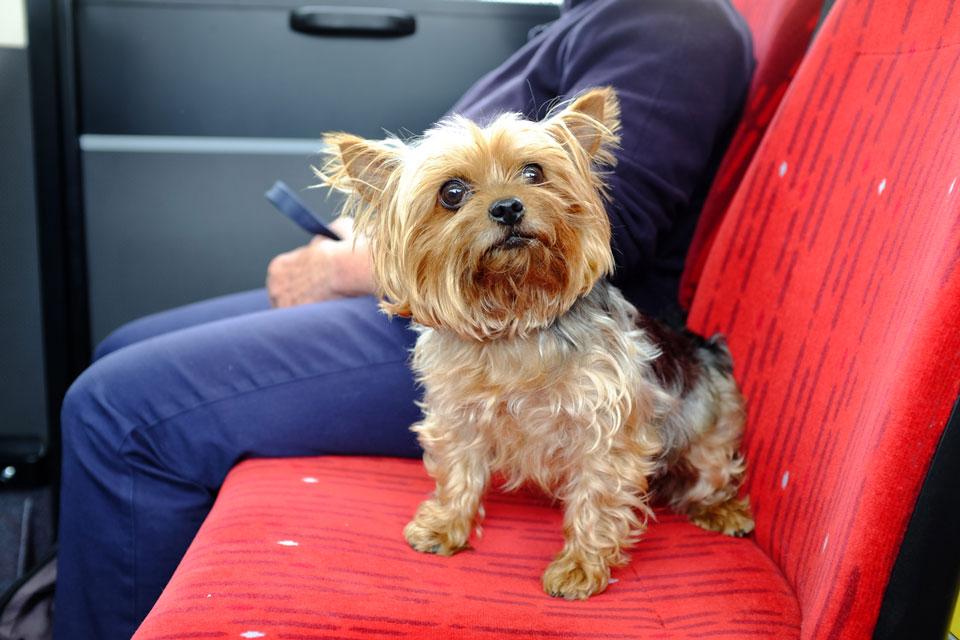 perro en el autobus