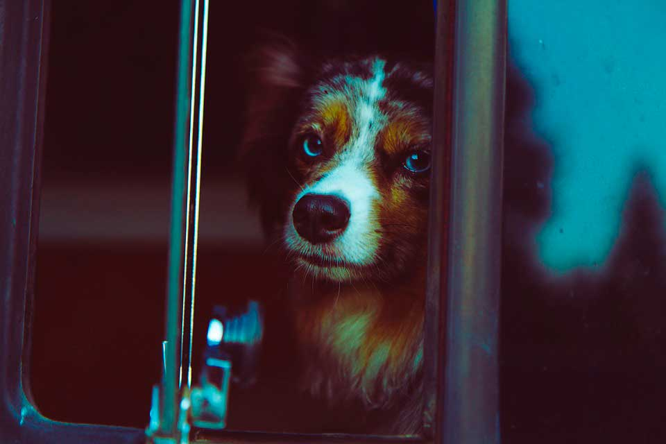perro en un autobús