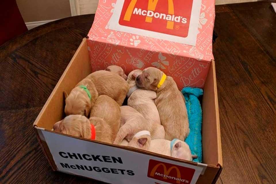 perros disfrazados como nuggets macdonoalds