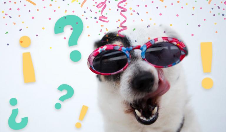 EL DISFRAZ MÁS MONO para perros este Carnaval no necesita que les disfracen