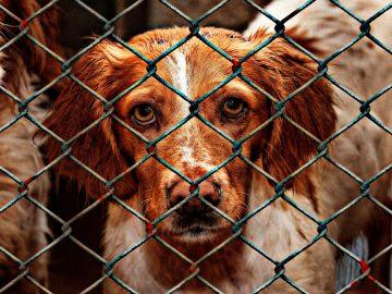 perro en una jaula