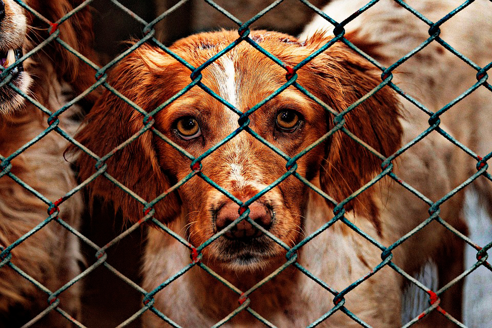 perro en una residencia canina