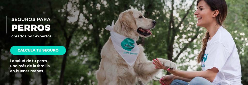 seguros perros veterinario