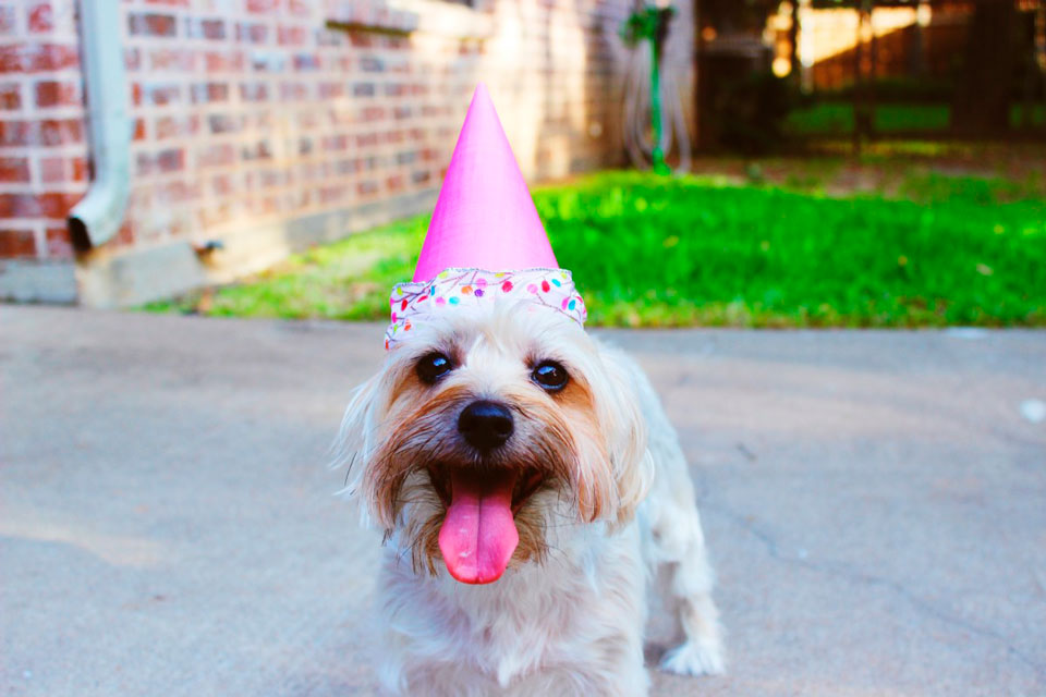 perro feliz con gorro de fiesta