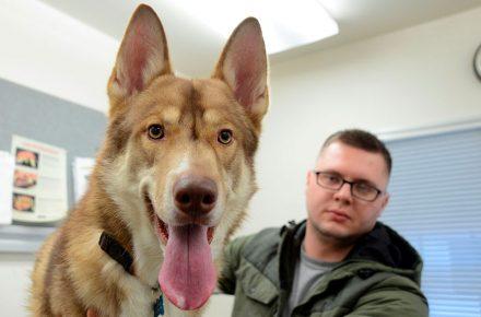 perro grande en el veterinario