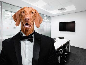 perro vestido con smoking