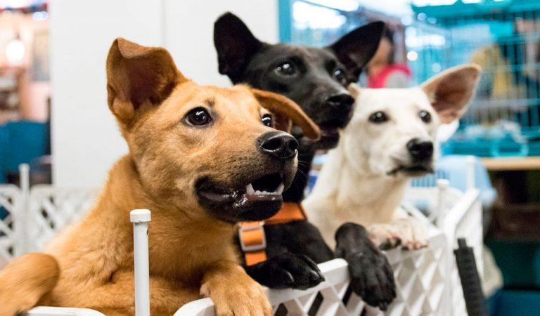 DÍA DE LOS ANIMALES CALLEJEROS: Sigue aumentando el abandono