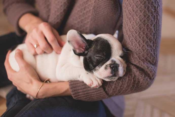 cachorro durmiendo en los brazos de una mujer