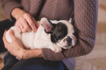 cachorro durmiendo en los brazos de su dueña