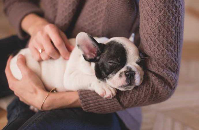 AMOR PERRUNO: ¿Cómo le digo a mi perro que le quiero de una manera que me entienda?