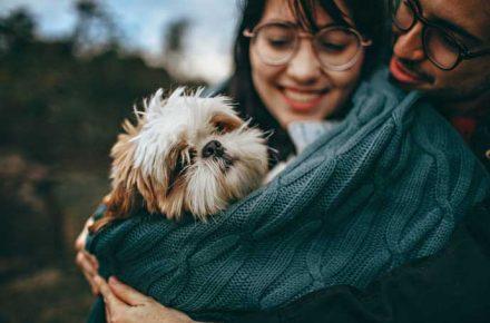 un perro en brazos de una chica