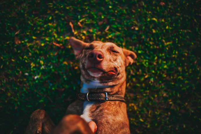 un perro tumbado sobre el cesped