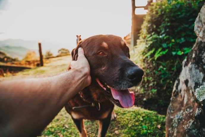 un perro al aire libre siendo acariciado por su dueño