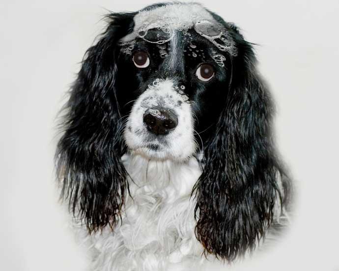 un perro durante su baño