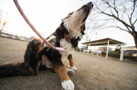 Un perro se rasca en la calle