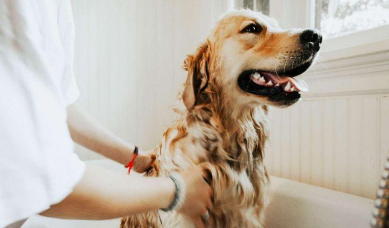 """El """"tip"""" de oro para hacer feliz a un perro"""